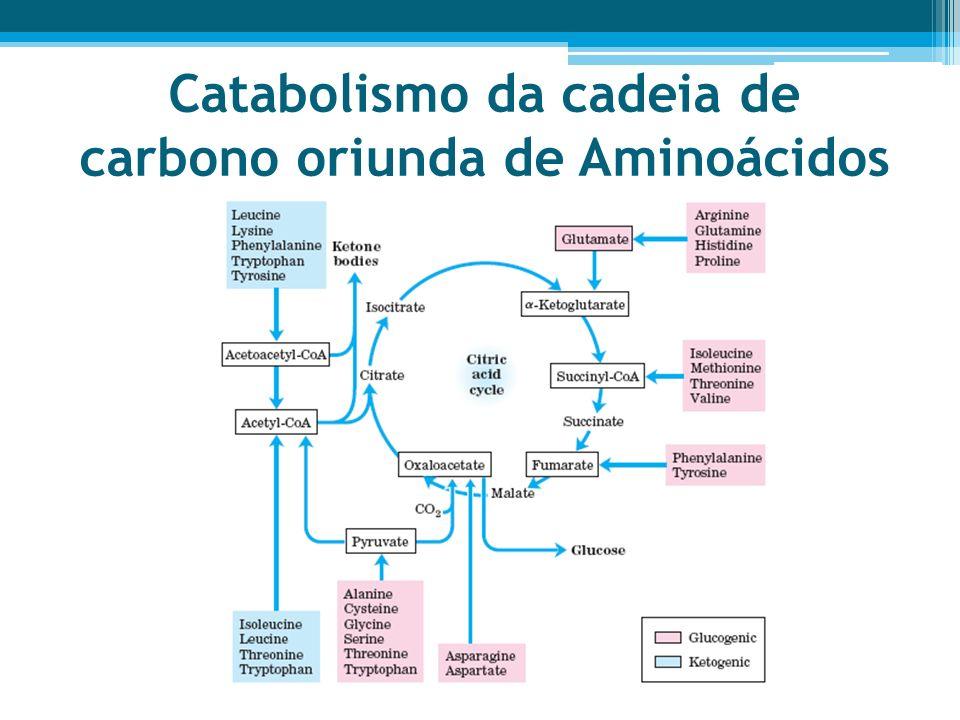 Catabolismo da cadeia de carbono oriunda de Aminoácidos