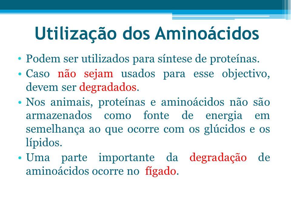 Utilização dos Aminoácidos