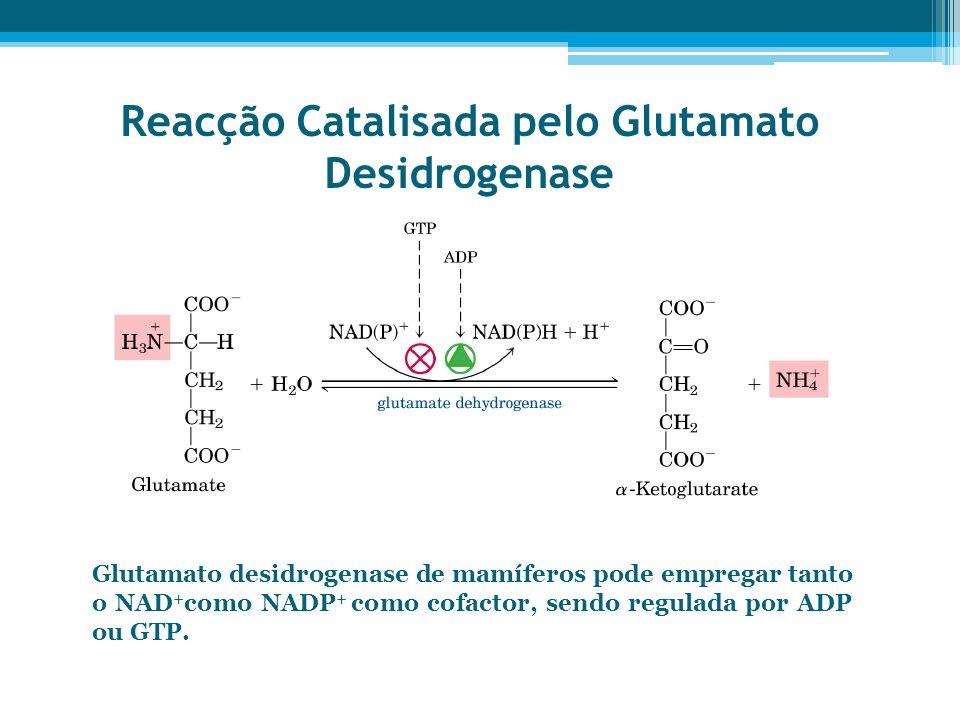 Reacção Catalisada pelo Glutamato Desidrogenase