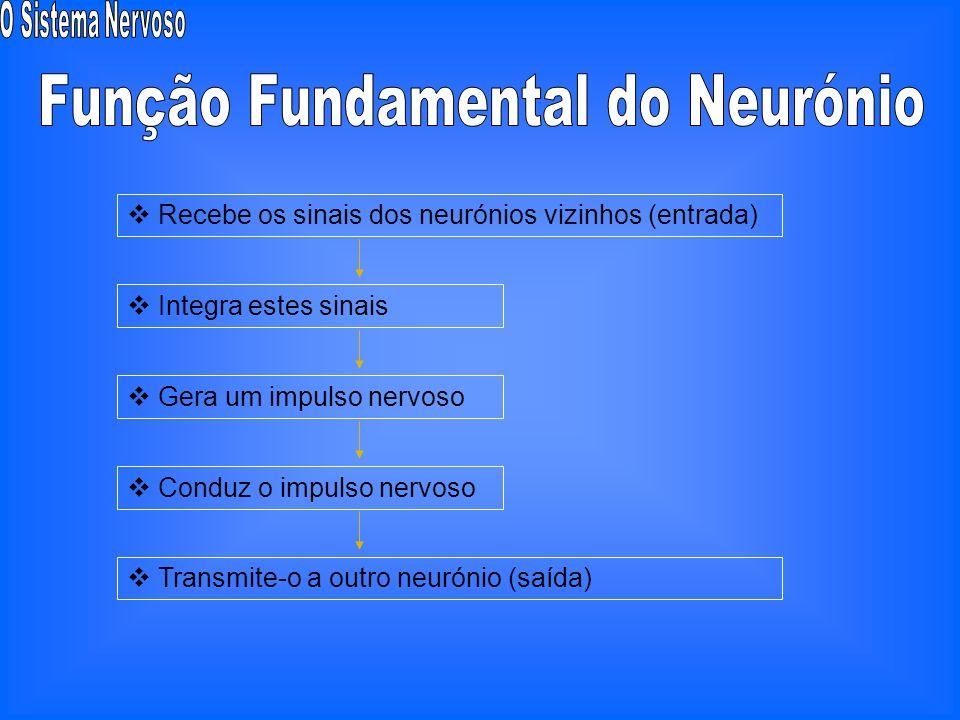 Função Fundamental do Neurónio