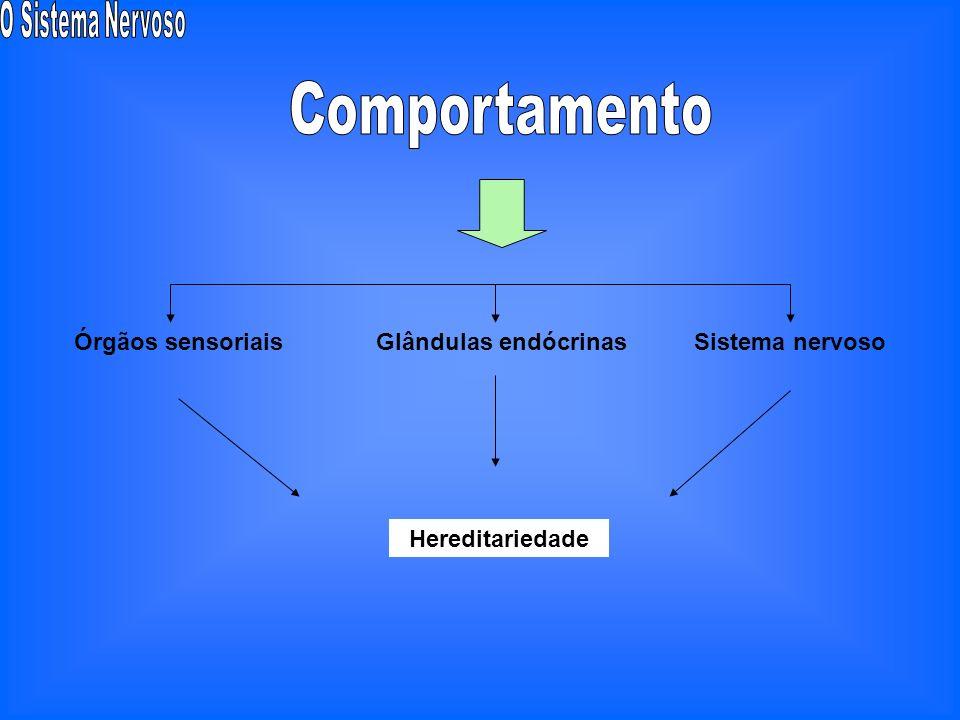 Comportamento Órgãos sensoriais Glândulas endócrinas Sistema nervoso
