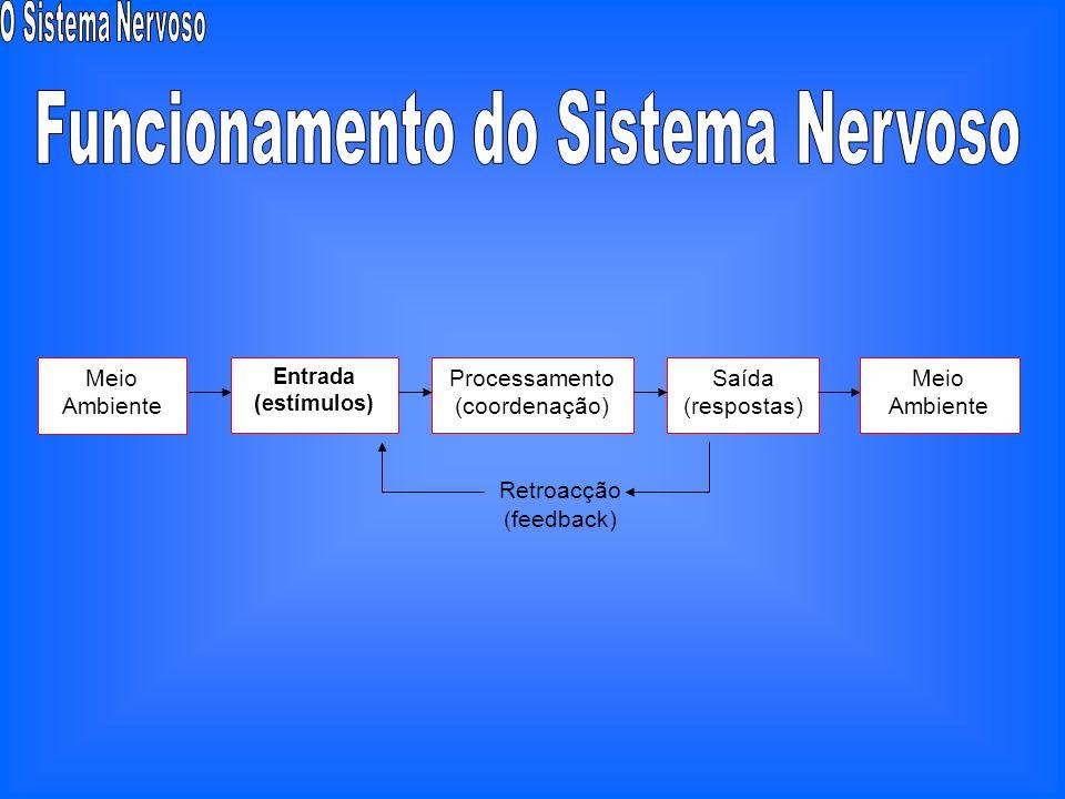 Funcionamento do Sistema Nervoso