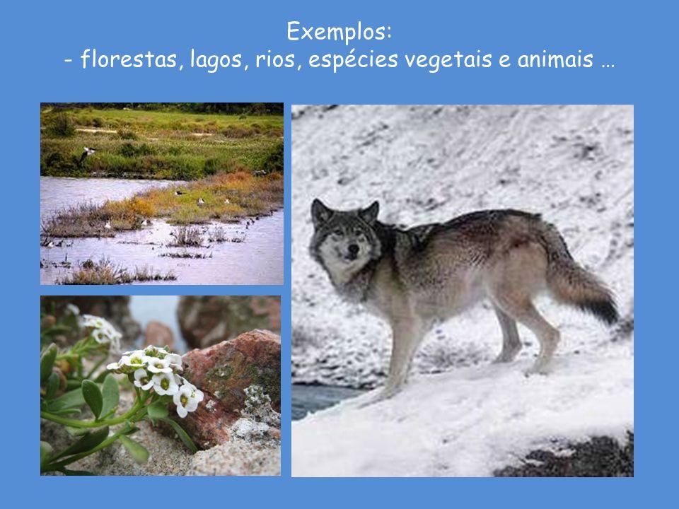 - florestas, lagos, rios, espécies vegetais e animais …