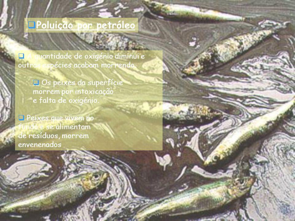 Poluição por petróleo A quantidade de oxigénio diminui e outras espécies acabam morrendo.