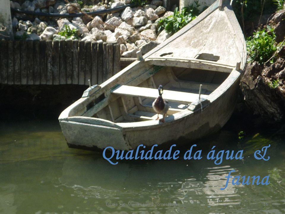 Qualidade da água & fauna