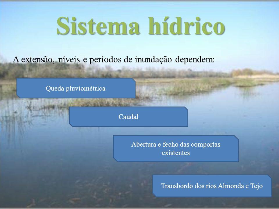 Sistema hídrico A extensão, níveis e períodos de inundação dependem: