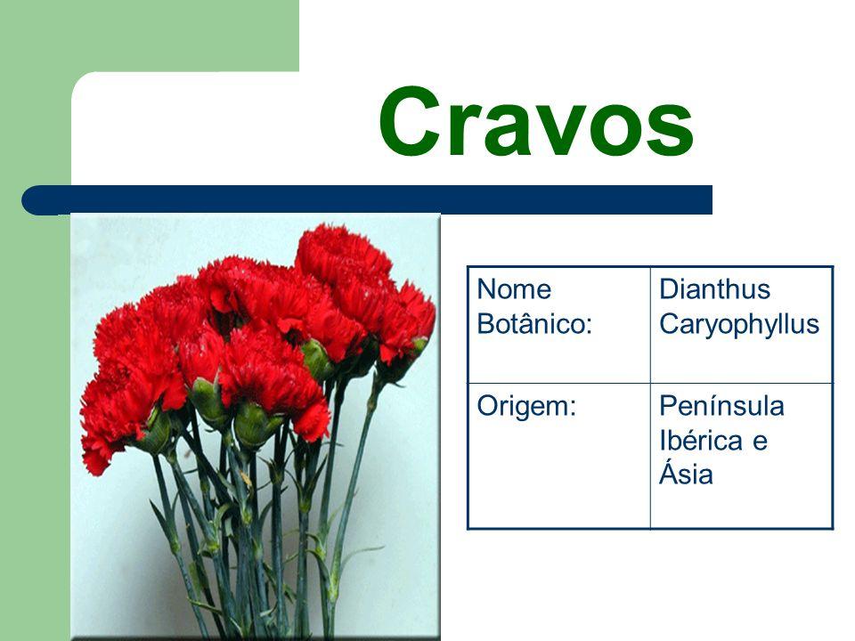 Cravos Nome Botânico: Dianthus Caryophyllus Origem: