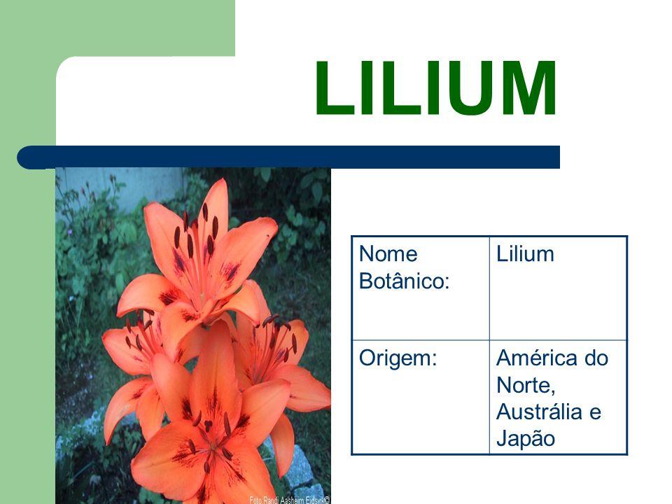 LILIUM Nome Botânico: Lilium Origem: