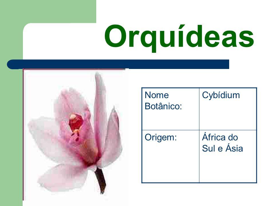 Orquídeas Nome Botânico: Cybídium Origem: África do Sul e Ásia