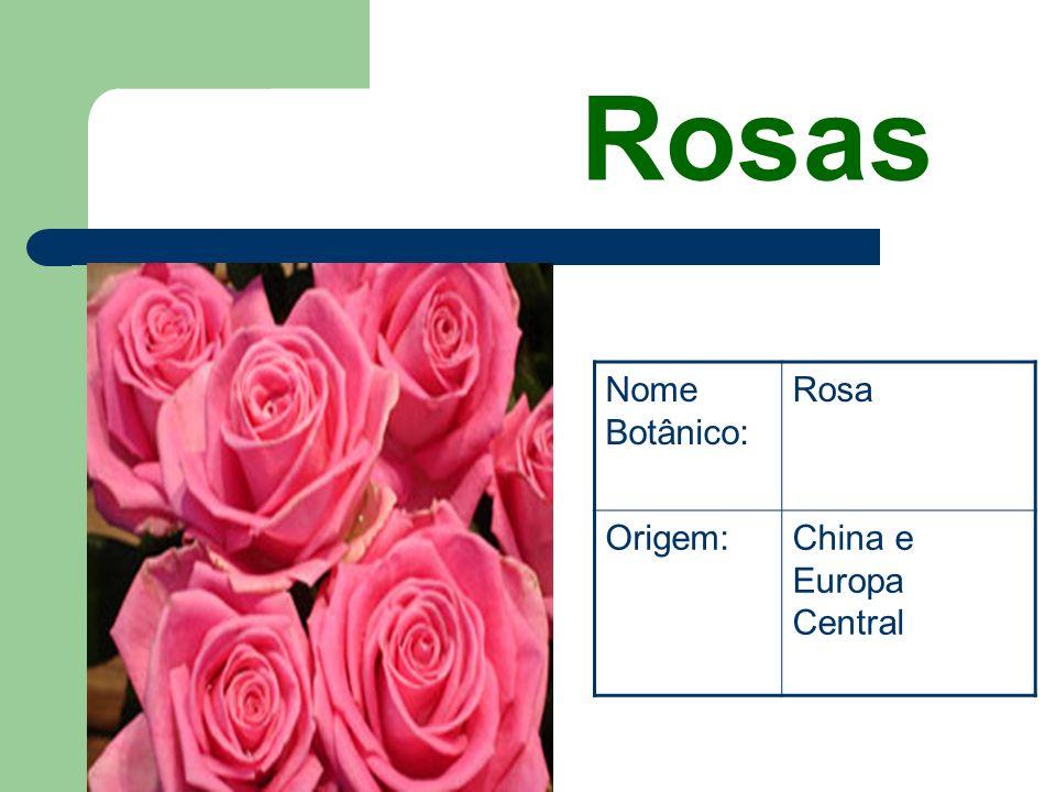 Rosas Nome Botânico: Rosa Origem: China e Europa Central