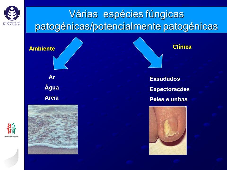 Várias espécies fúngicas patogénicas/potencialmente patogénicas