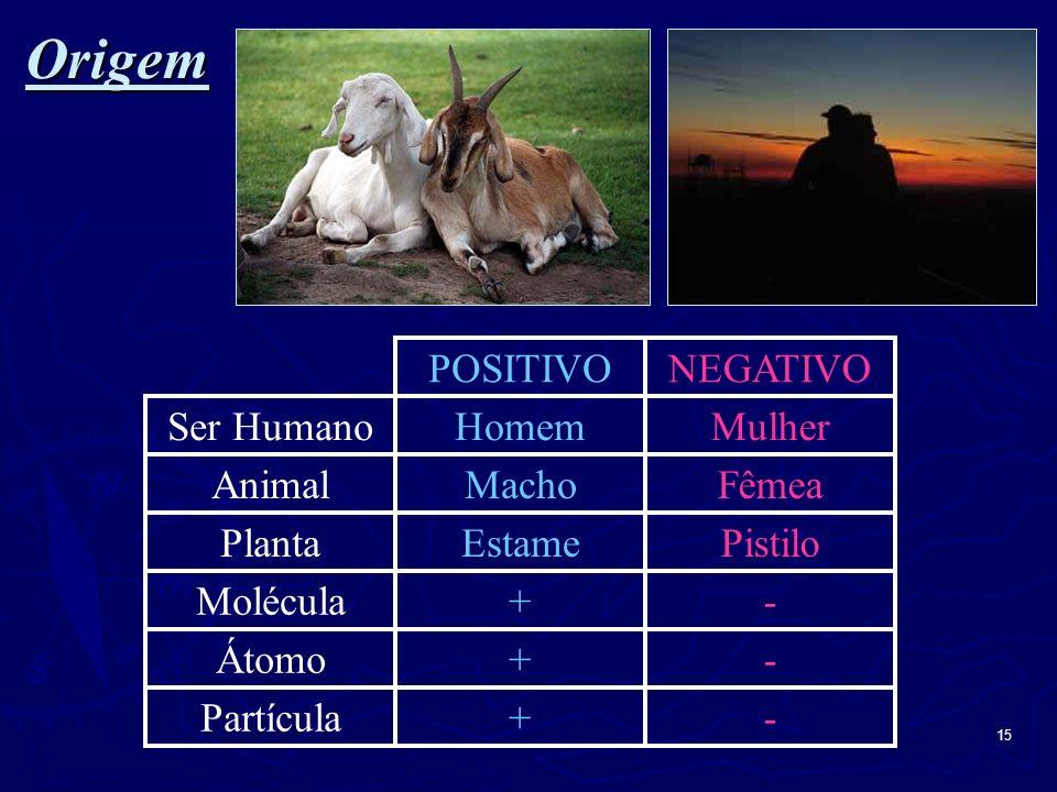 Origem POSITIVO NEGATIVO Ser Humano Animal Planta Molécula Átomo