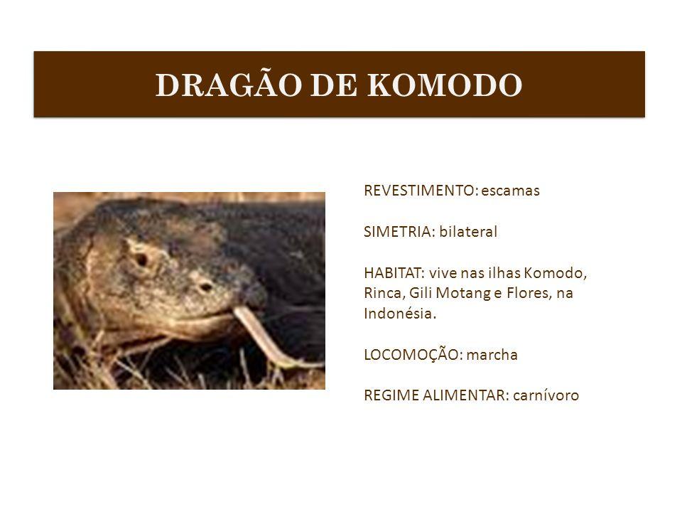 DRAGÃO DE KOMODO REVESTIMENTO: escamas SIMETRIA: bilateral