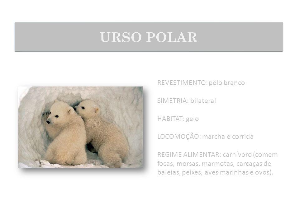 URSO POLAR REVESTIMENTO: pêlo branco SIMETRIA: bilateral HABITAT: gelo