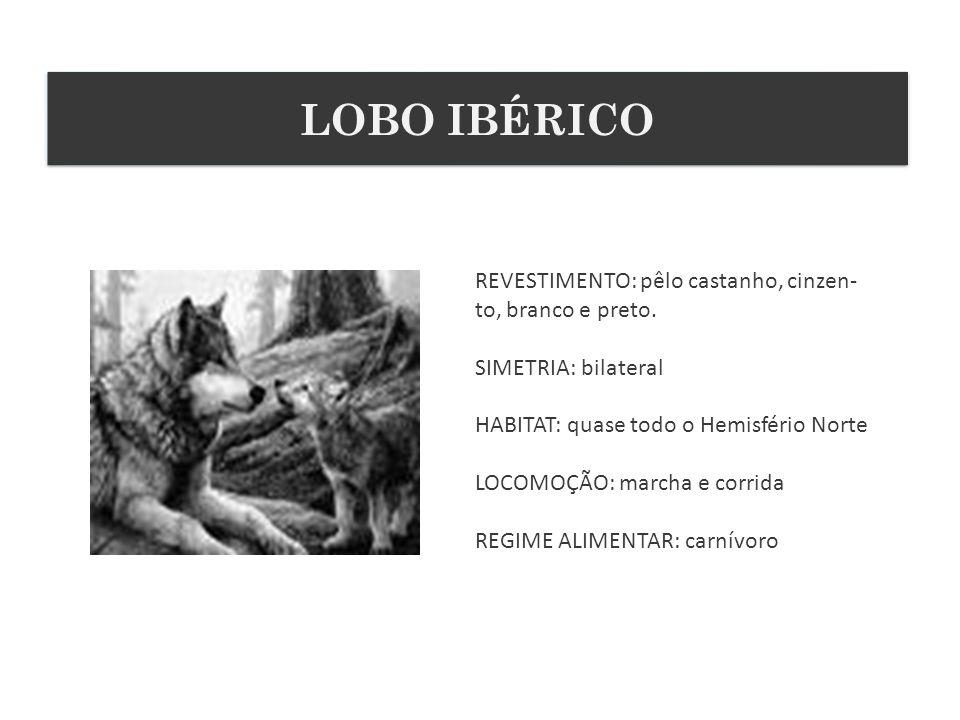 LOBO IBÉRICO REVESTIMENTO: pêlo castanho, cinzen-to, branco e preto.