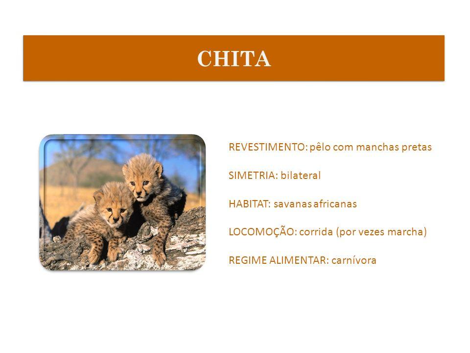 CHITA REVESTIMENTO: pêlo com manchas pretas SIMETRIA: bilateral