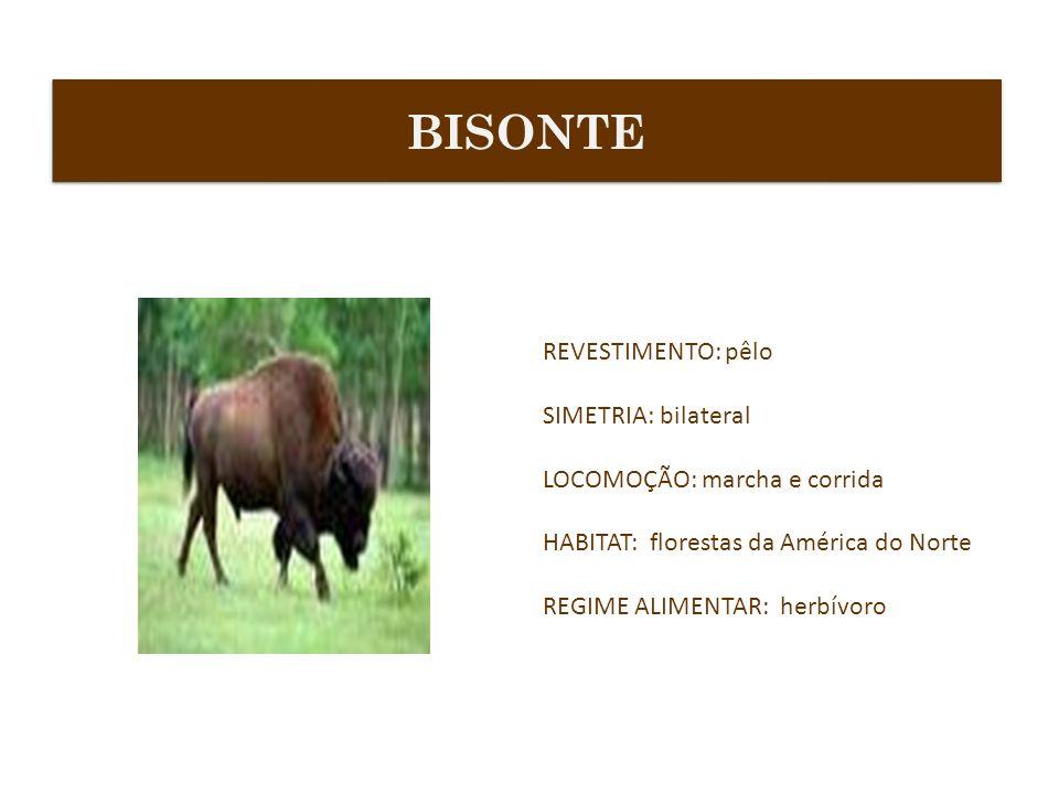 BISONTE REVESTIMENTO: pêlo SIMETRIA: bilateral