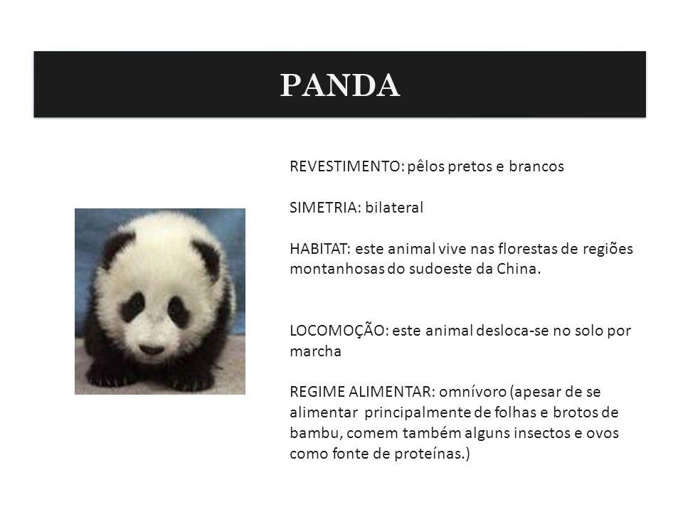 PANDA REVESTIMENTO: pêlos pretos e brancos SIMETRIA: bilateral