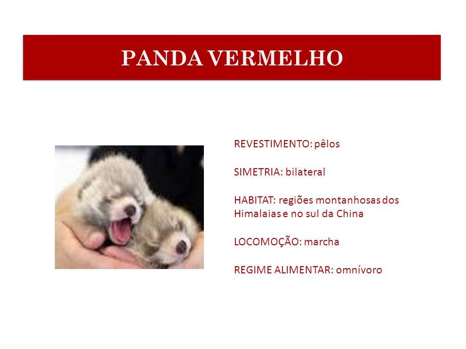 PANDA VERMELHO REVESTIMENTO: pêlos SIMETRIA: bilateral
