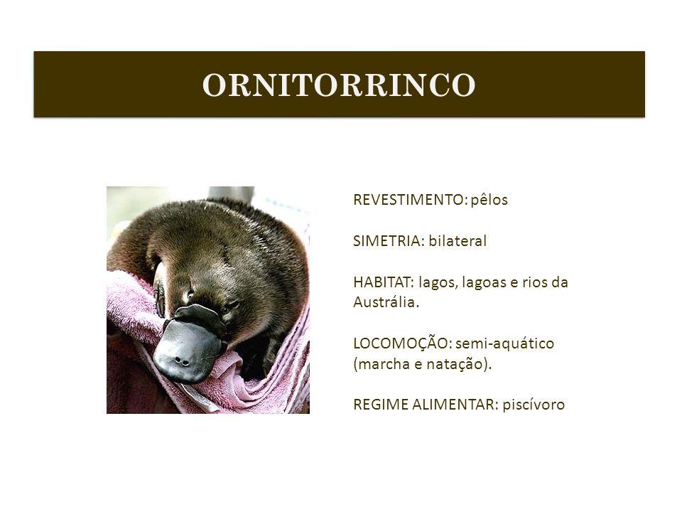 ORNITORRINCO REVESTIMENTO: pêlos SIMETRIA: bilateral