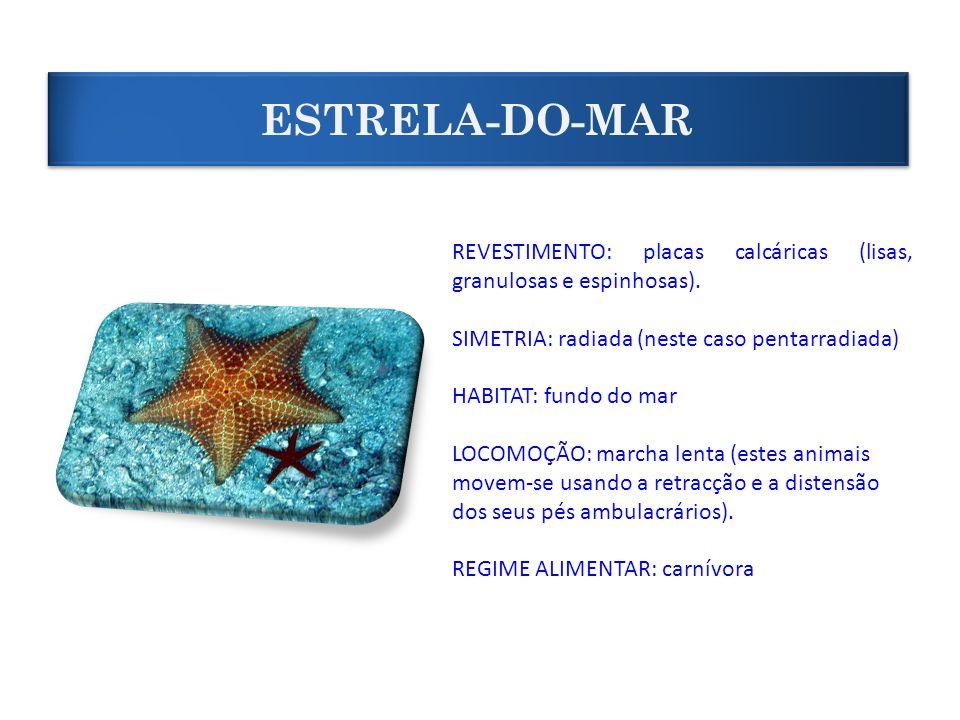 ESTRELA-DO-MARREVESTIMENTO: placas calcáricas (lisas, granulosas e espinhosas). SIMETRIA: radiada (neste caso pentarradiada)