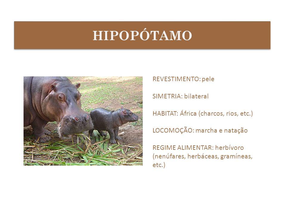 HIPOPÓTAMO REVESTIMENTO: pele SIMETRIA: bilateral