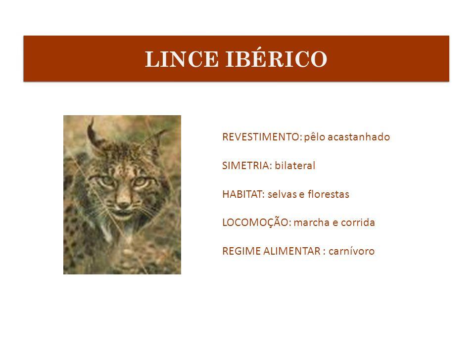 LINCE IBÉRICO REVESTIMENTO: pêlo acastanhado SIMETRIA: bilateral