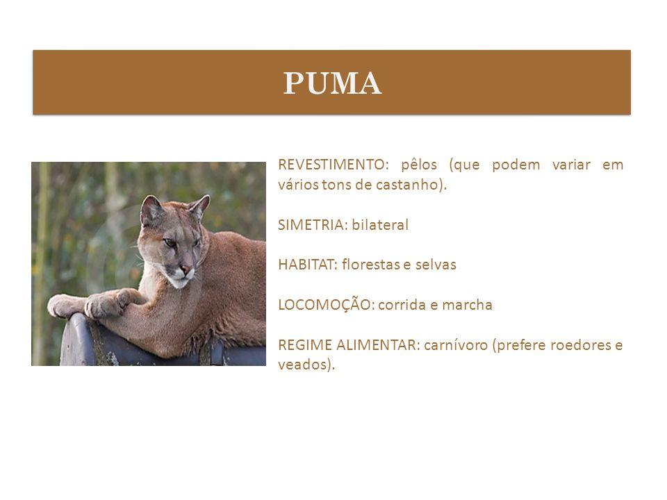 PUMAREVESTIMENTO: pêlos (que podem variar em vários tons de castanho). SIMETRIA: bilateral. HABITAT: florestas e selvas.