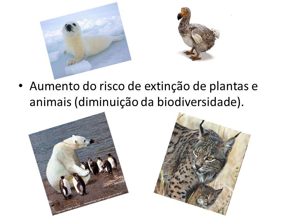 Aumento do risco de extinção de plantas e animais (diminuição da biodiversidade).
