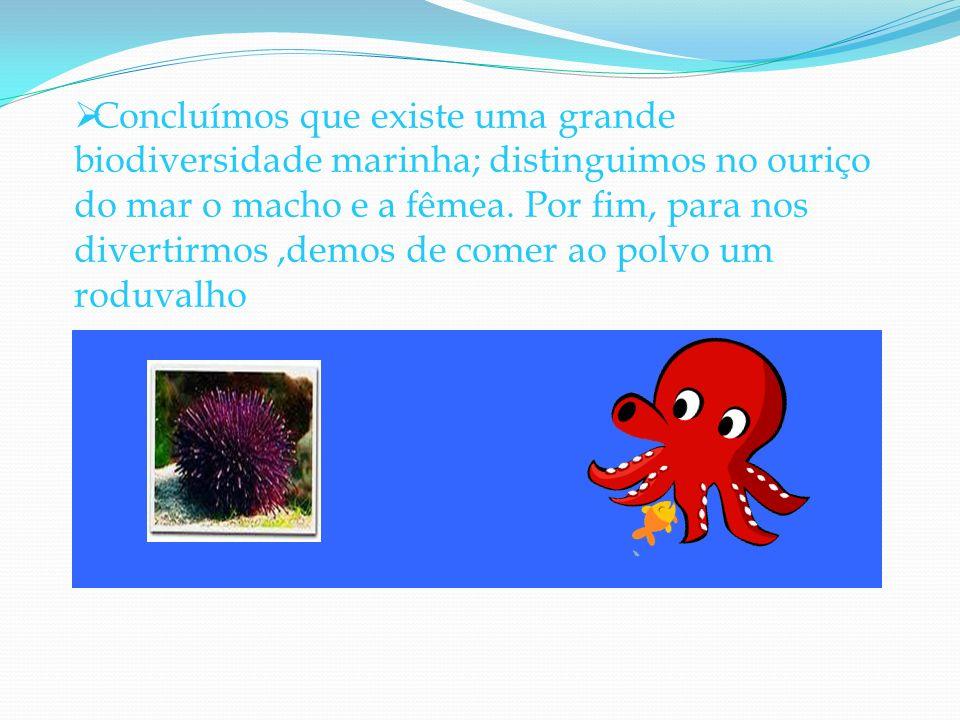 Concluímos que existe uma grande biodiversidade marinha; distinguimos no ouriço do mar o macho e a fêmea.