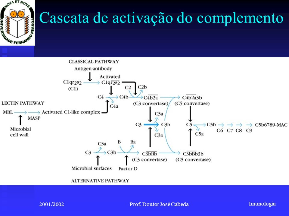 Cascata de activação do complemento