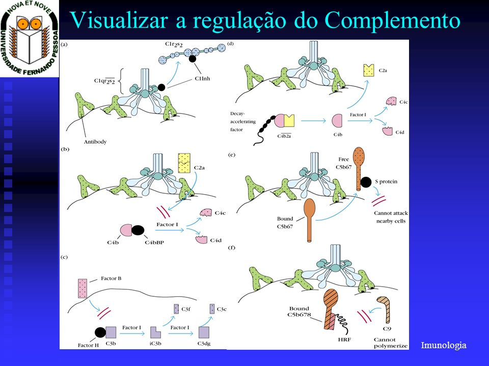 Visualizar a regulação do Complemento