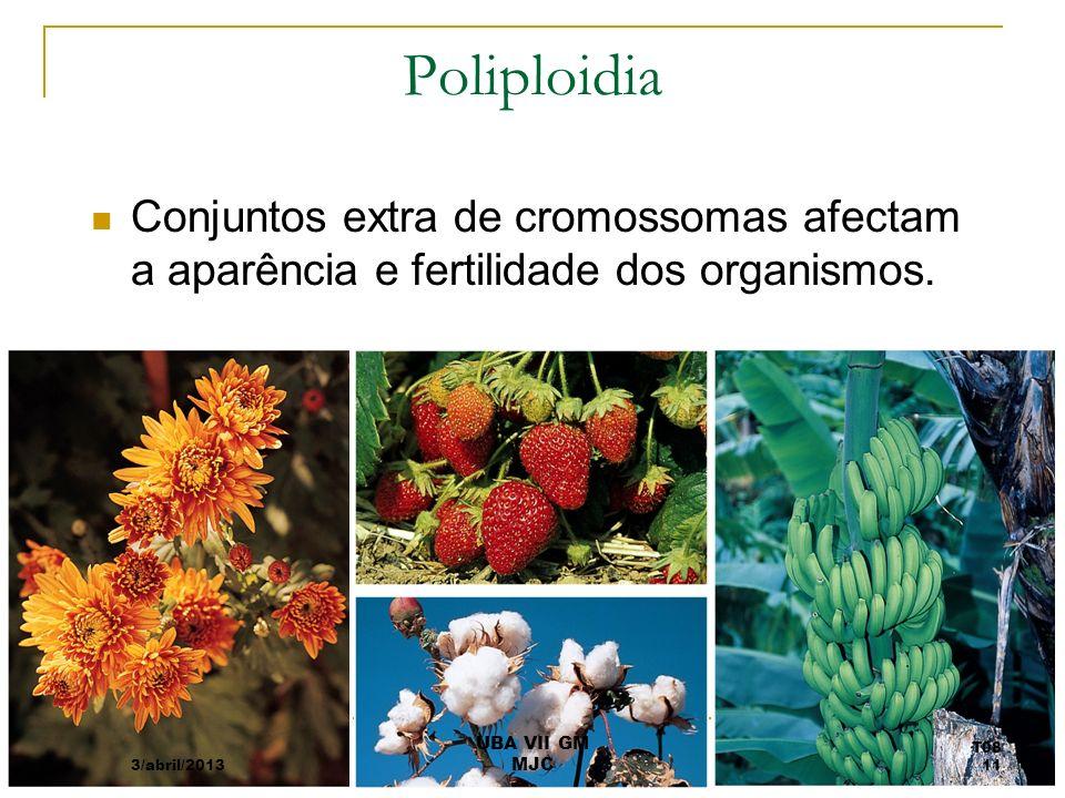 Poliploidia Conjuntos extra de cromossomas afectam a aparência e fertilidade dos organismos. 3/abril/2013.
