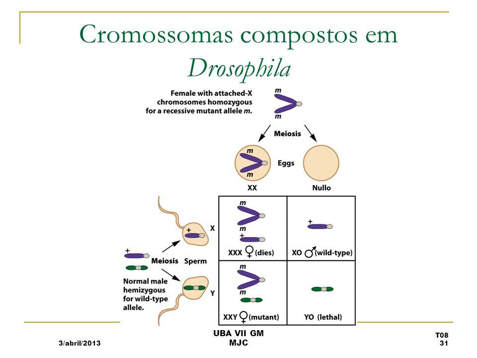 Cromossomas compostos em Drosophila