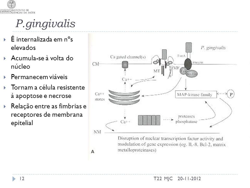P.gingivalis É internalizada em nºs elevados
