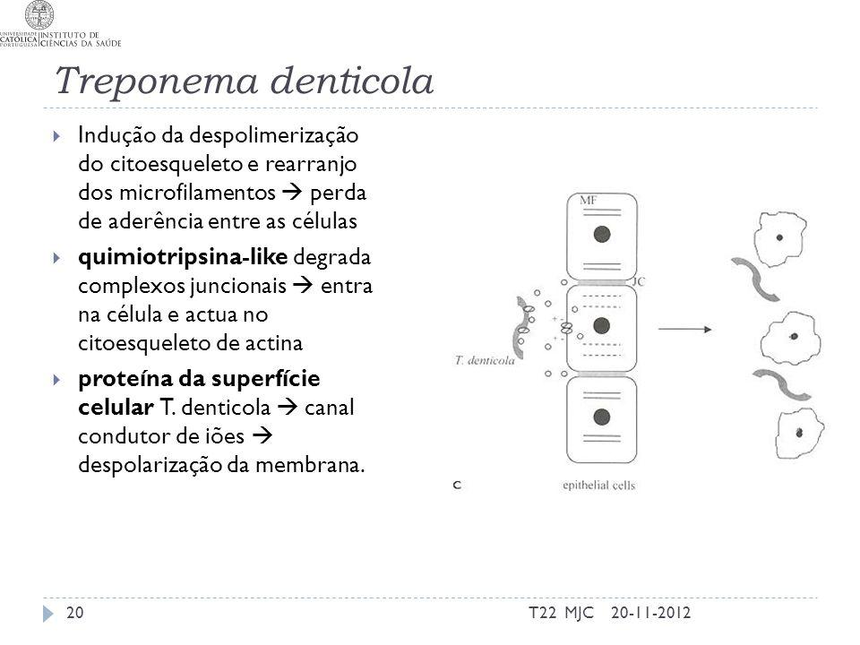 Treponema denticola Indução da despolimerização do citoesqueleto e rearranjo dos microfilamentos  perda de aderência entre as células.