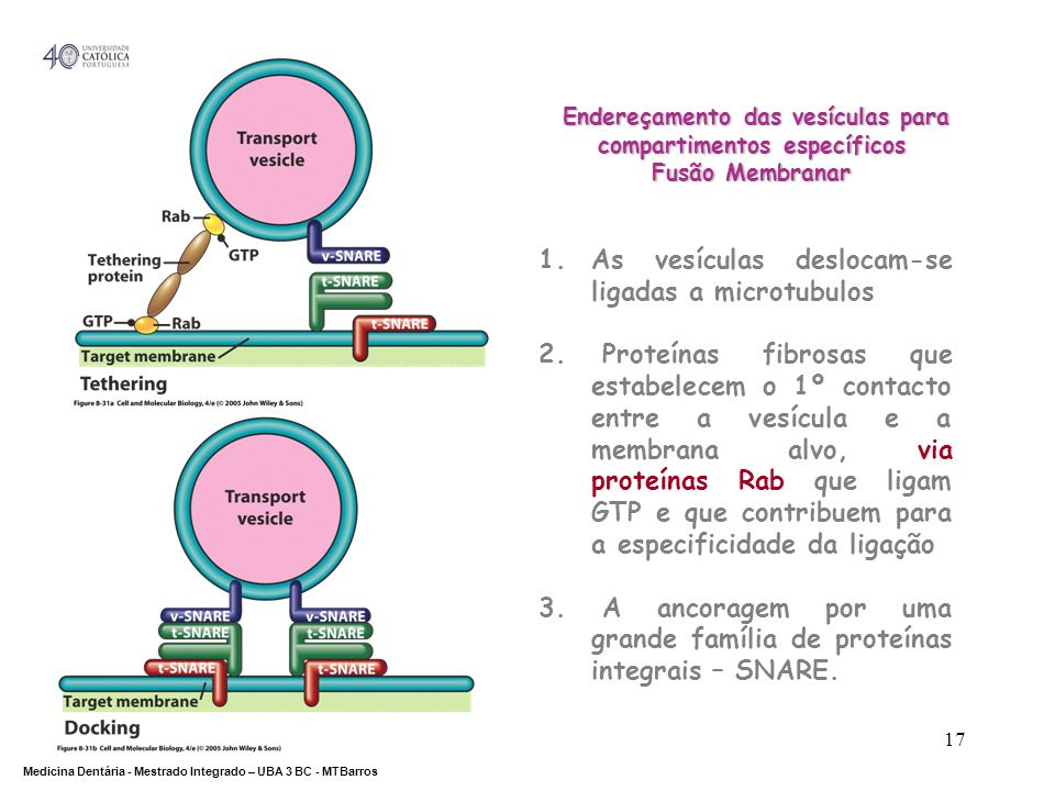 Endereçamento das vesículas para compartimentos específicos