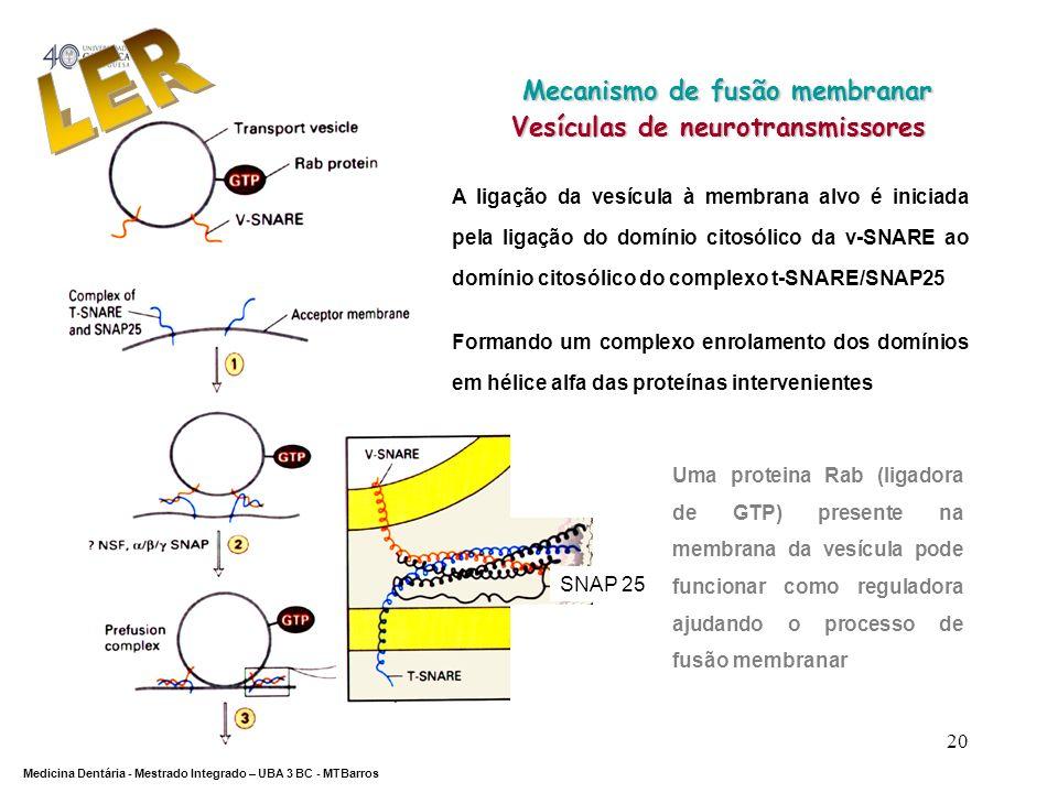 Mecanismo de fusão membranar Vesículas de neurotransmissores