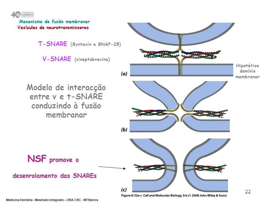 Mecanismo de fusão membranar