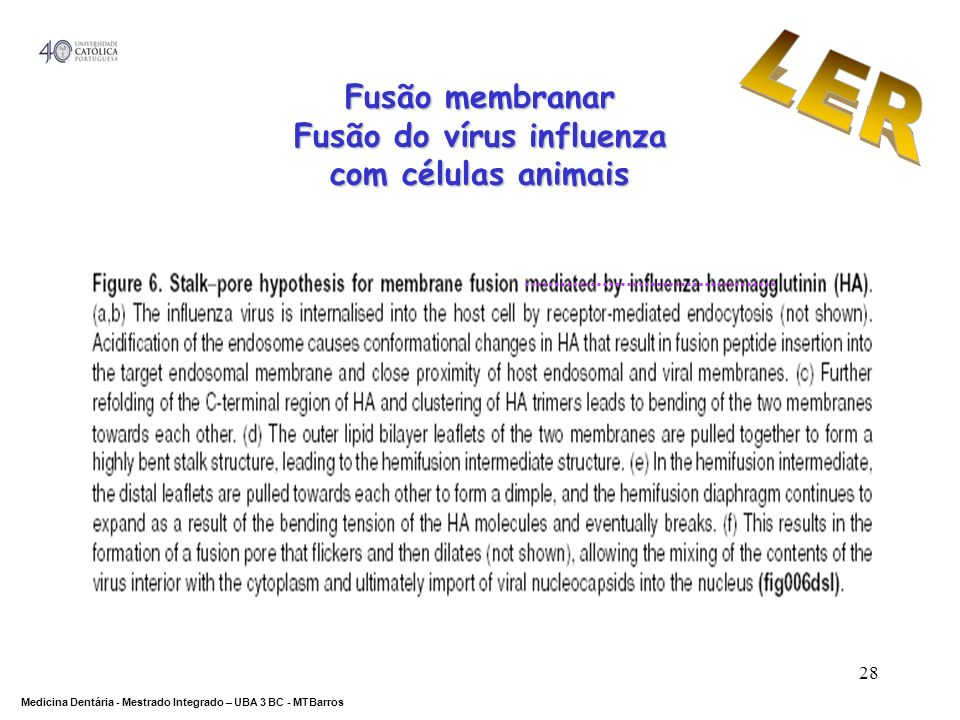 Fusão do vírus influenza