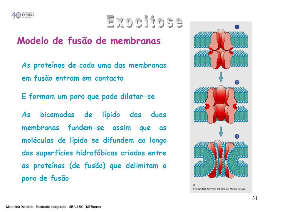 Exocitose Modelo de fusão de membranas