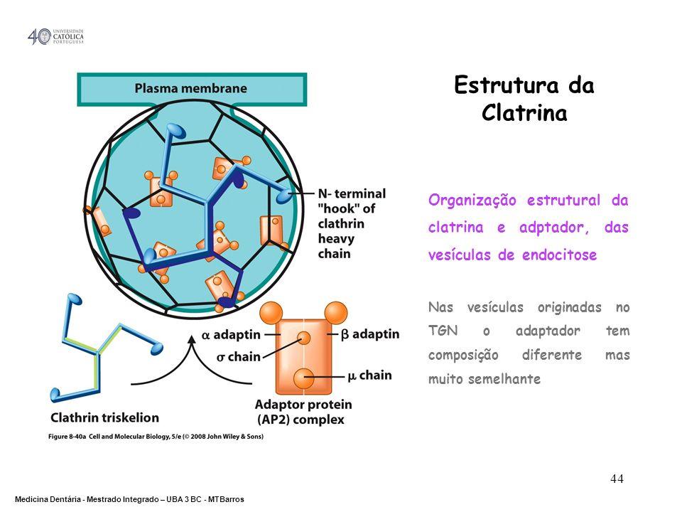 Estrutura da Clatrina Organização estrutural da clatrina e adptador, das vesículas de endocitose.