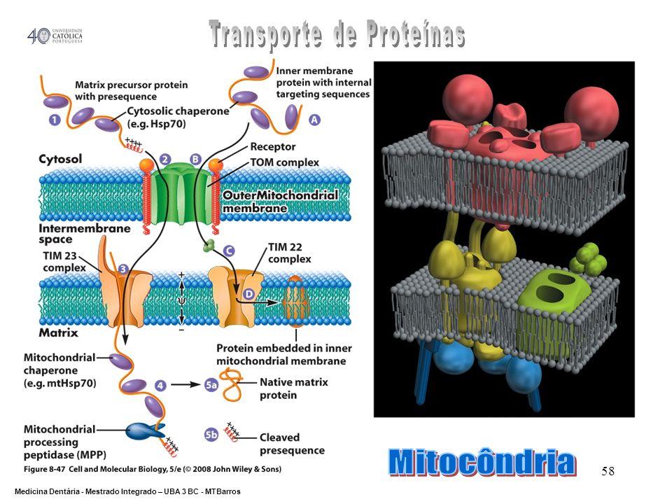 Transporte de Proteínas
