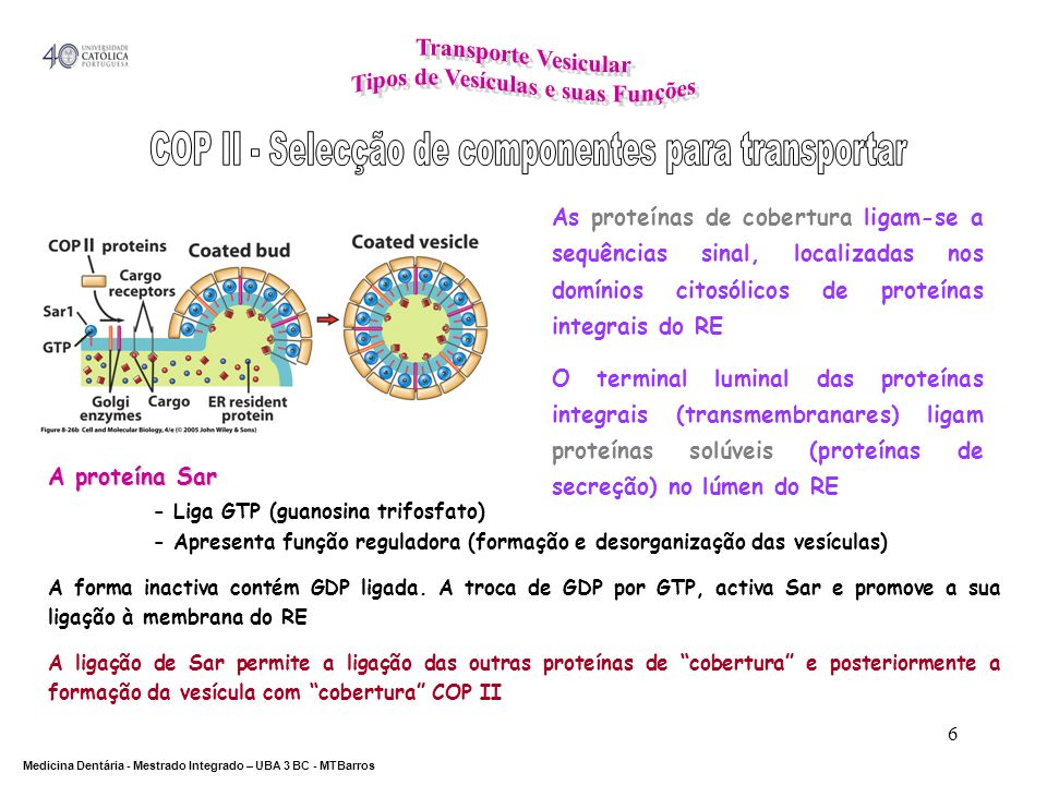 COP II - Selecção de componentes para transportar