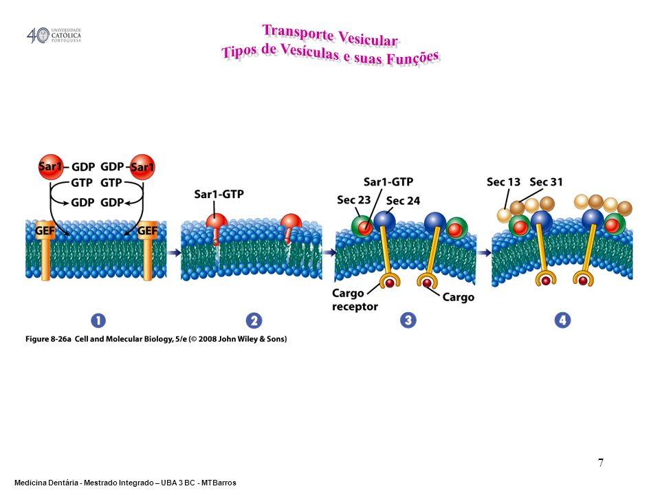 Tipos de Vesículas e suas Funções