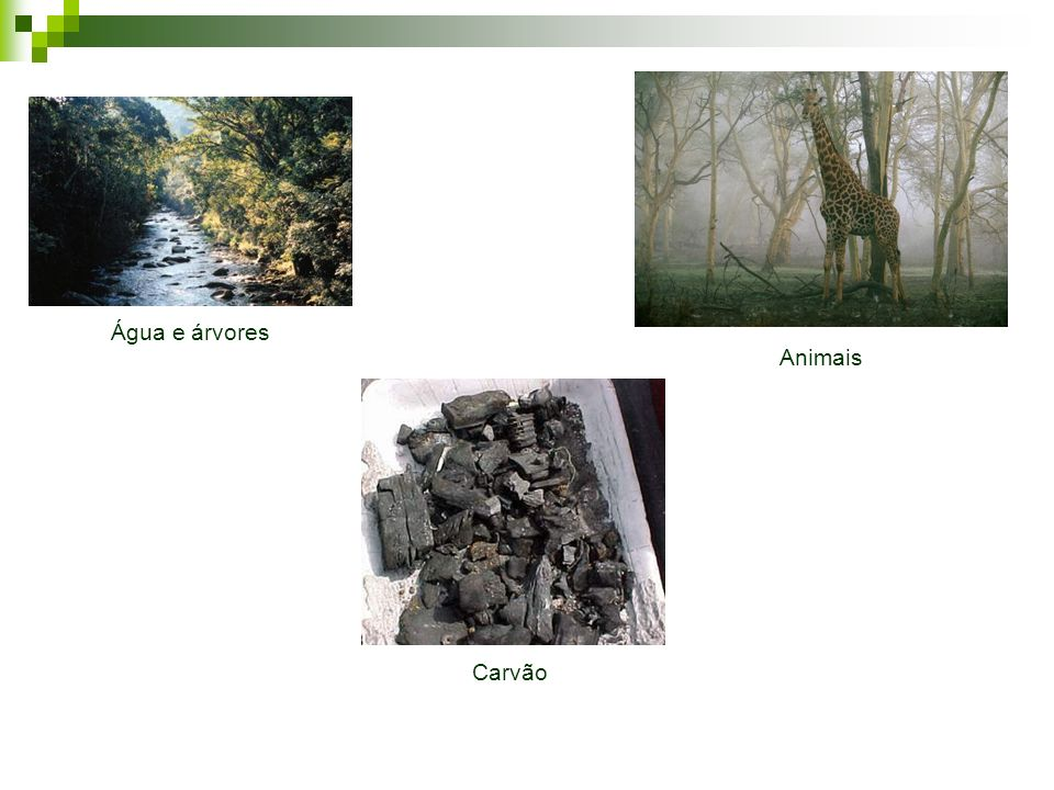 Água e árvores Animais Carvão