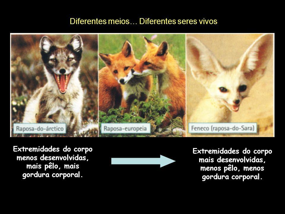 Diferentes meios… Diferentes seres vivos