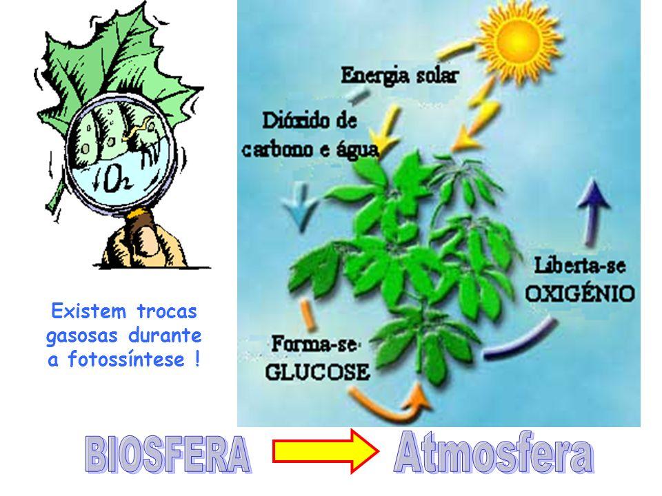Existem trocas gasosas durante a fotossíntese !
