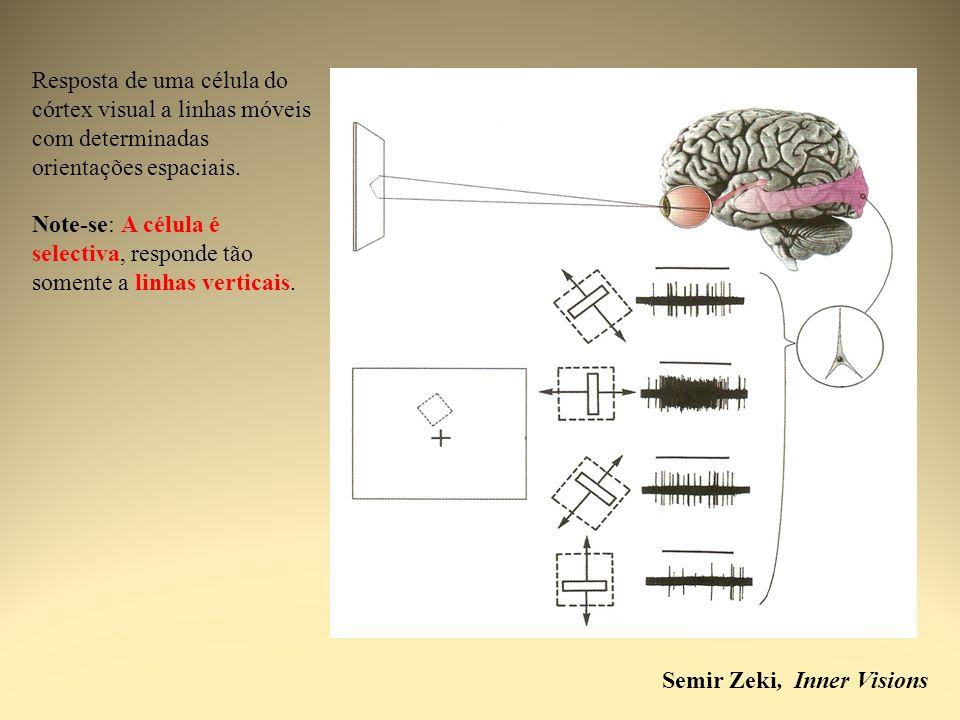 Resposta de uma célula do córtex visual a linhas móveis com determinadas orientações espaciais.