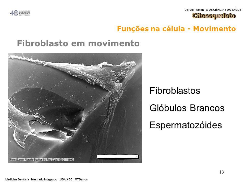 Fibroblastos Glóbulos Brancos Espermatozóides Citoesqueleto